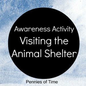 Visit the Animal shelter